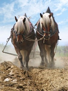 traino-cavalli