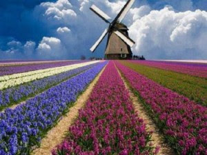 fiori-mulino