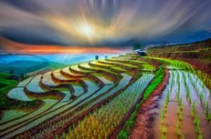 la-magica-coltivazione-del-riso-in-terrazze-a-chiangmai-tailandia